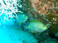 Asisbiz Dive 8 Philippines Mindoro Sabang Junk Nov 2005 29