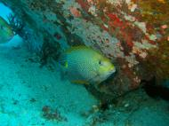 Asisbiz Dive 8 Philippines Mindoro Sabang Junk Nov 2005 31