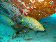 Asisbiz Dive 8 Philippines Mindoro Sabang Junk Nov 2005 32