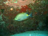 Asisbiz Dive 8 Philippines Mindoro Sabang Junk Nov 2005 35