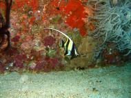 Asisbiz Dive 8 Philippines Mindoro Sabang Junk Nov 2005 39