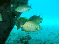 Asisbiz Dive 8 Philippines Mindoro Sabang Junk Nov 2005 40
