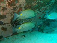 Asisbiz Dive 8 Philippines Mindoro Sabang Junk Nov 2005 43