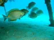 Asisbiz Dive 8 Philippines Mindoro Sabang Junk Nov 2005 45