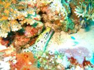Asisbiz Dive 8 Philippines Mindoro Sabang Junk Nov 2005 60