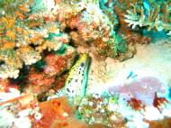 Asisbiz Dive 8 Philippines Mindoro Sabang Junk Nov 2005 61