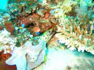 Asisbiz Dive 8 Philippines Mindoro Sabang Junk Nov 2005 62