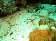 Asisbiz Dive 8 Philippines Mindoro Sabang Junk Nov 2005 68