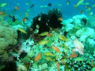 Asisbiz Dive 8 Philippines Mindoro Sabang Junk Nov 2005 71