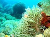 Asisbiz Dive 8 Philippines Mindoro Sabang Junk Nov 2005 81