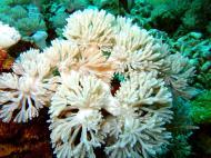 Asisbiz Dive 8 Philippines Mindoro Sabang Junk Nov 2005 88