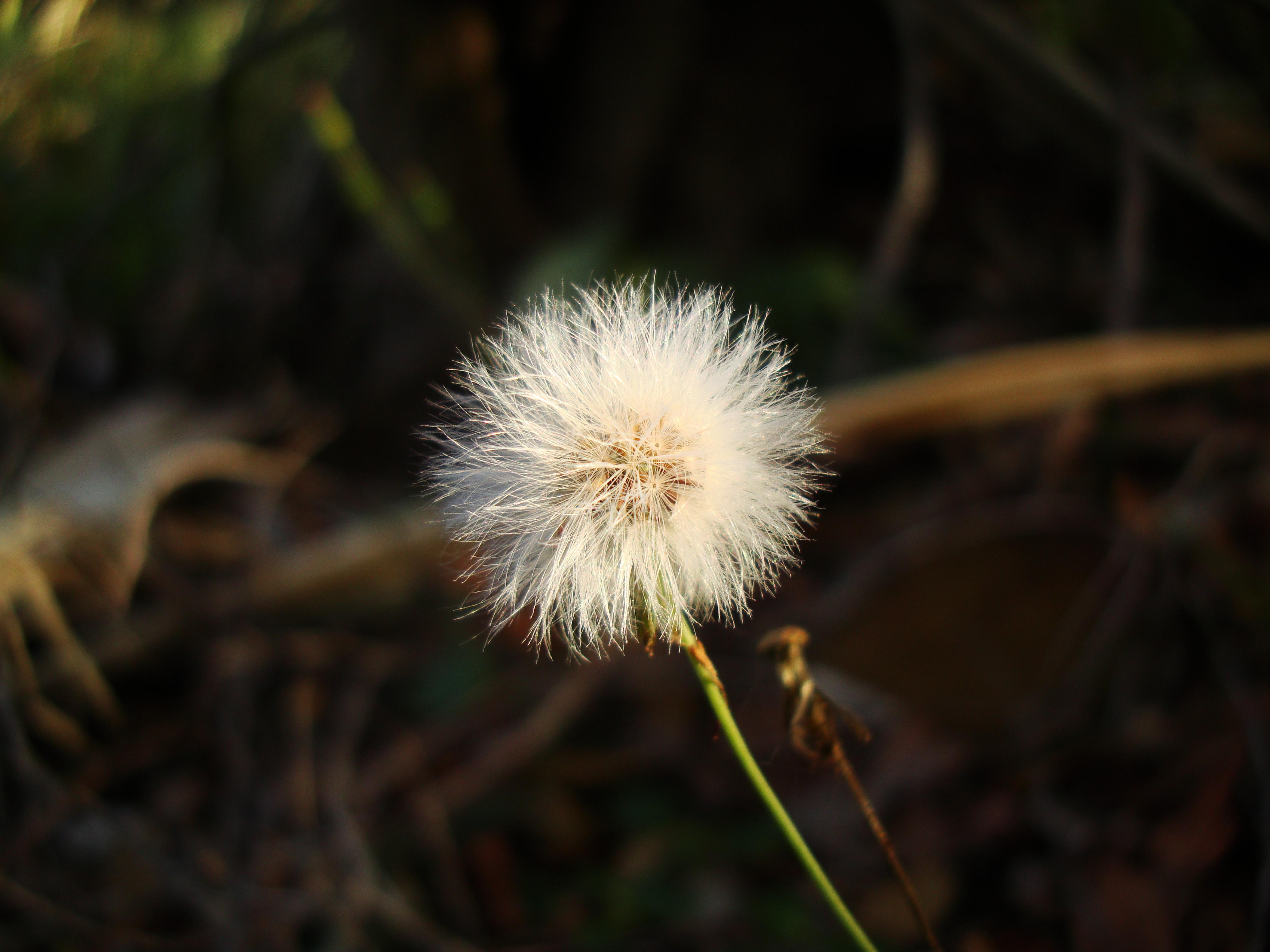 Tiny Flowers Daisy seeds Noosa Australia 04