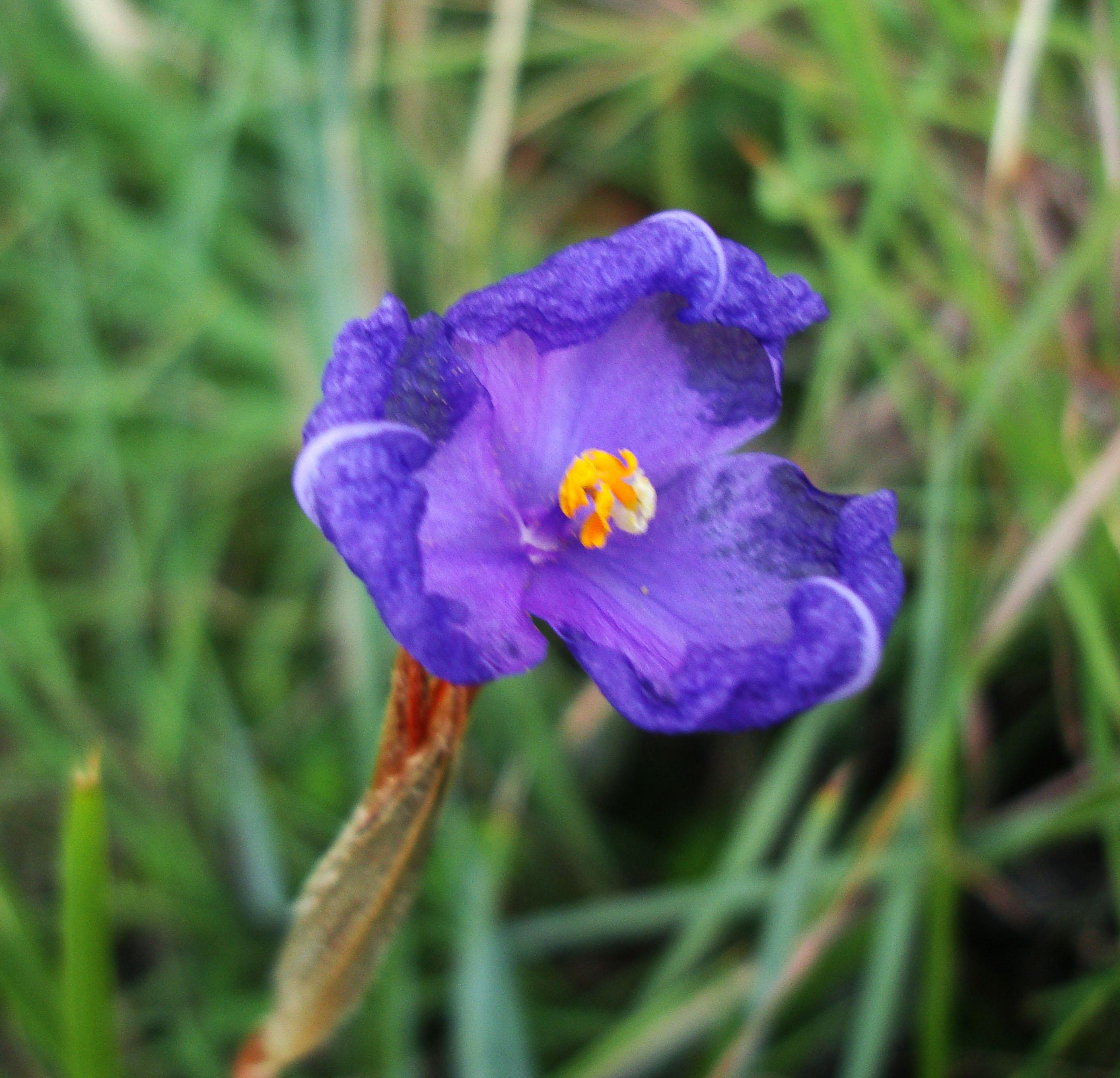 Tiny bush flowers Noosa National Park Qld Australia 12