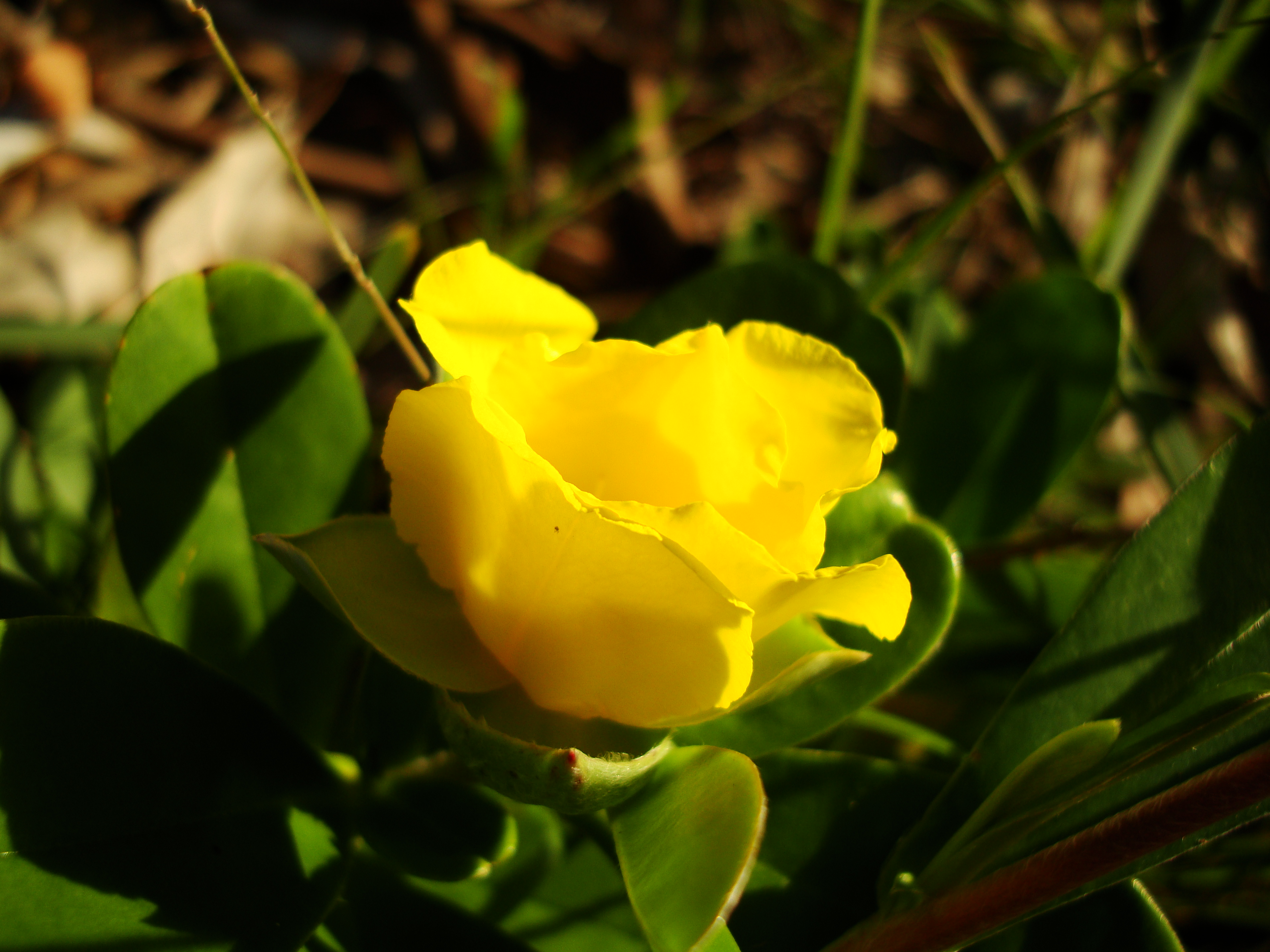 Tiny bush flowers Noosa National Park Qld Australia 16