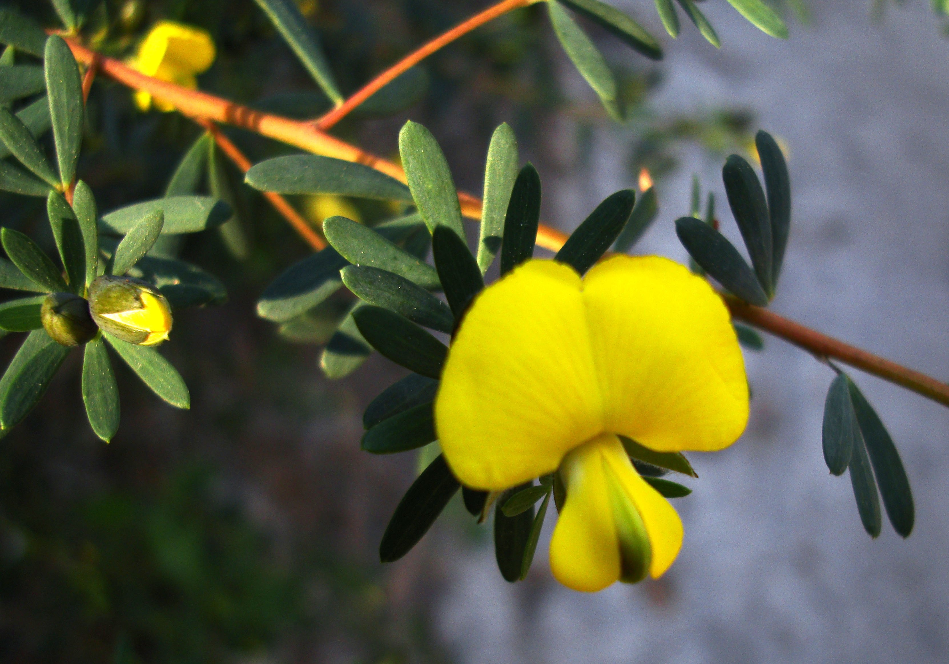 Tiny bush flowers Noosa National Park Qld Australia 23