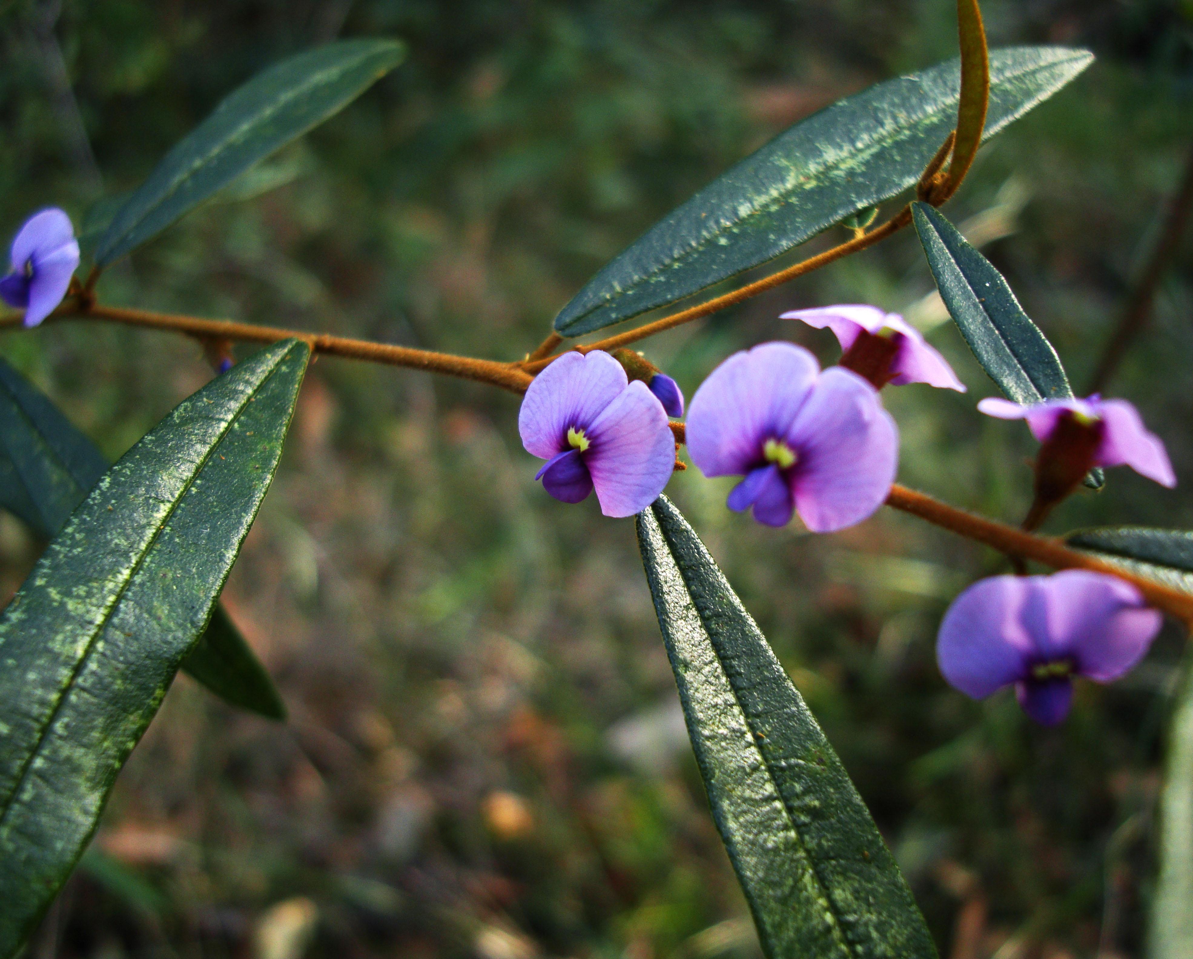Tiny bush flowers Noosa National Park Qld Australia 27