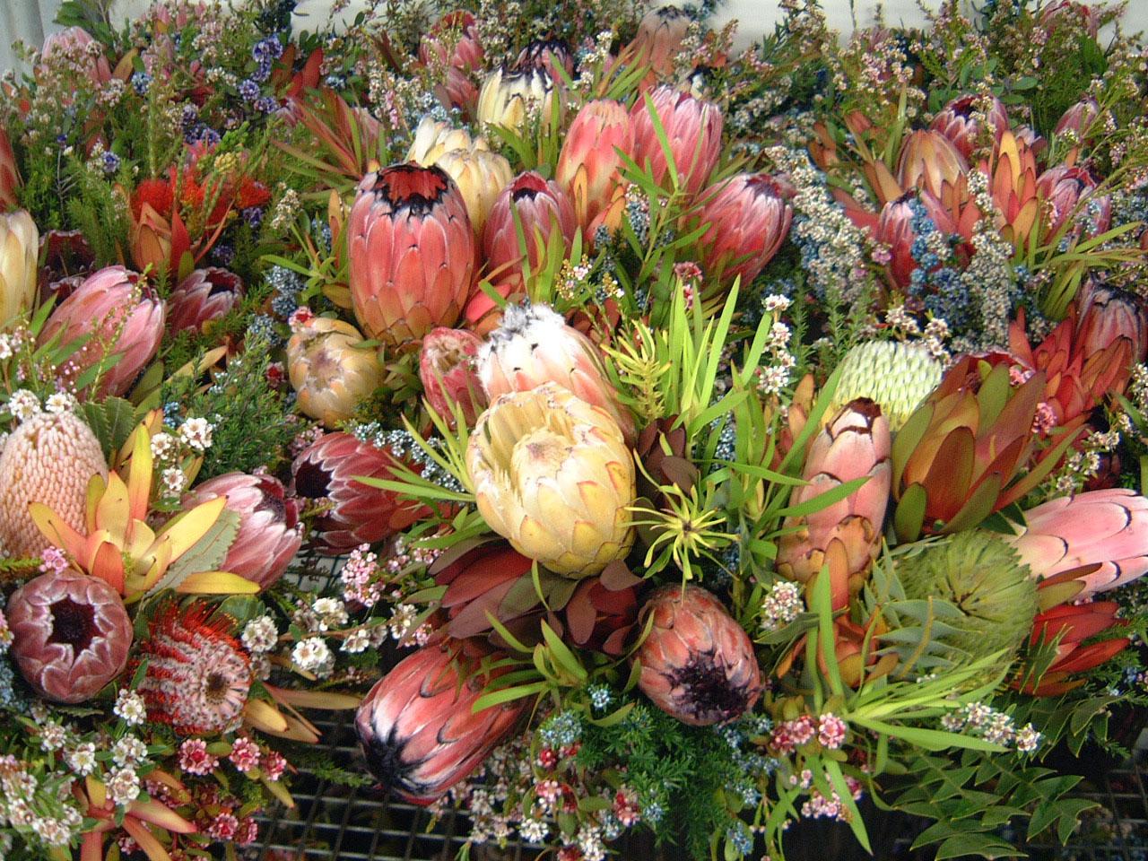 Australia Brisbane Flower Markets 01