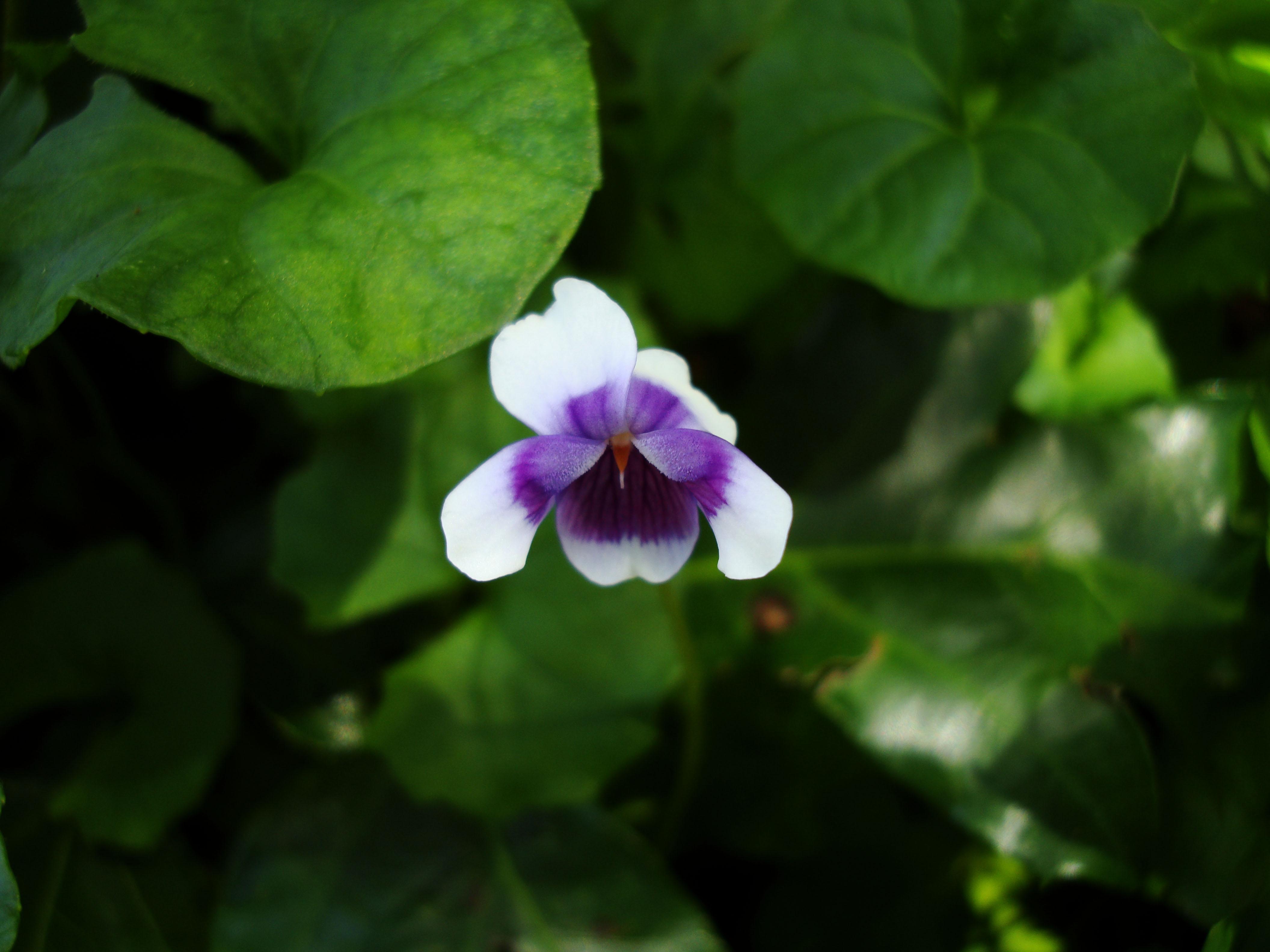 Flowers Australia Malaney 01