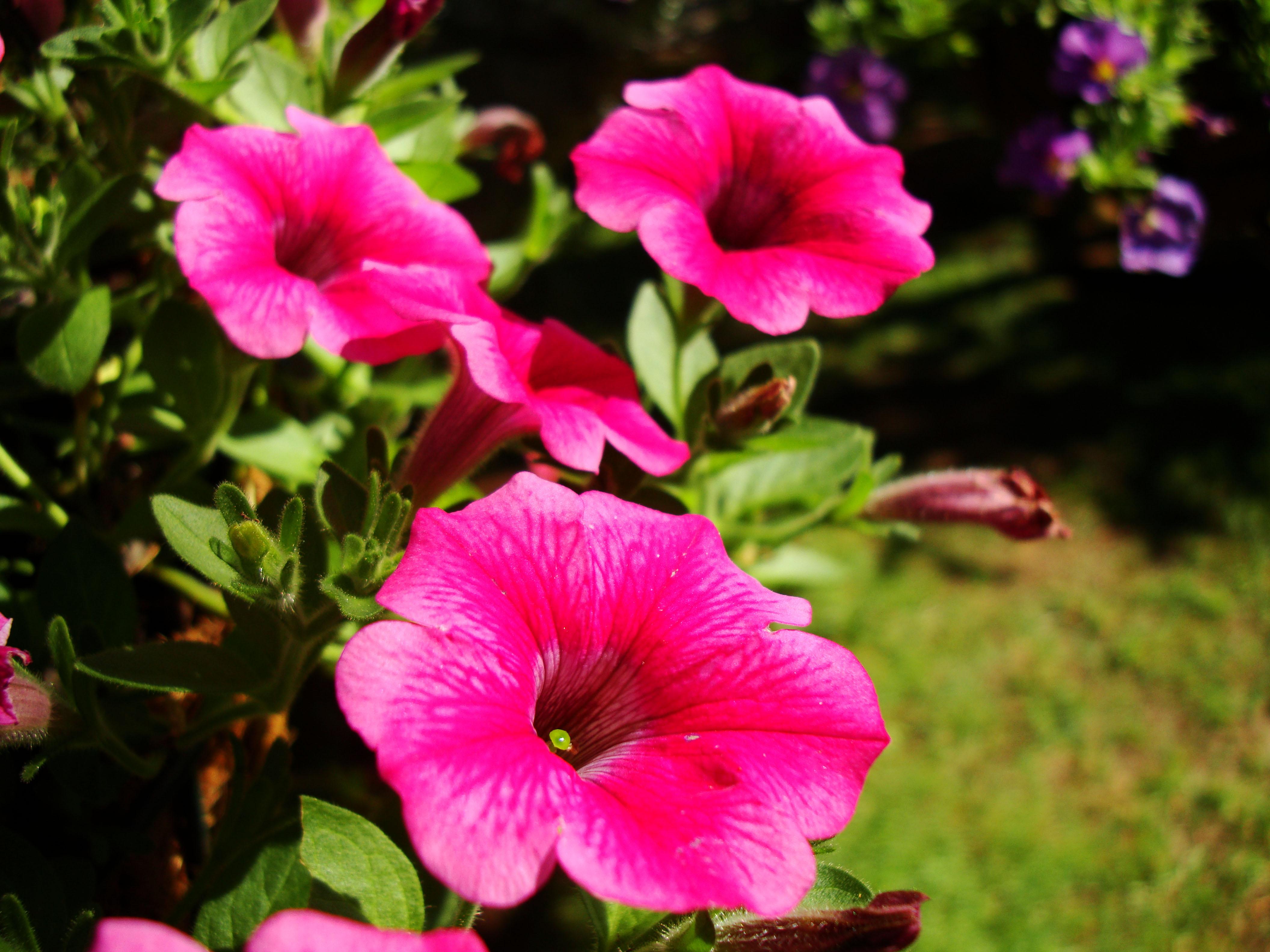 Flowers Australia Malaney 10