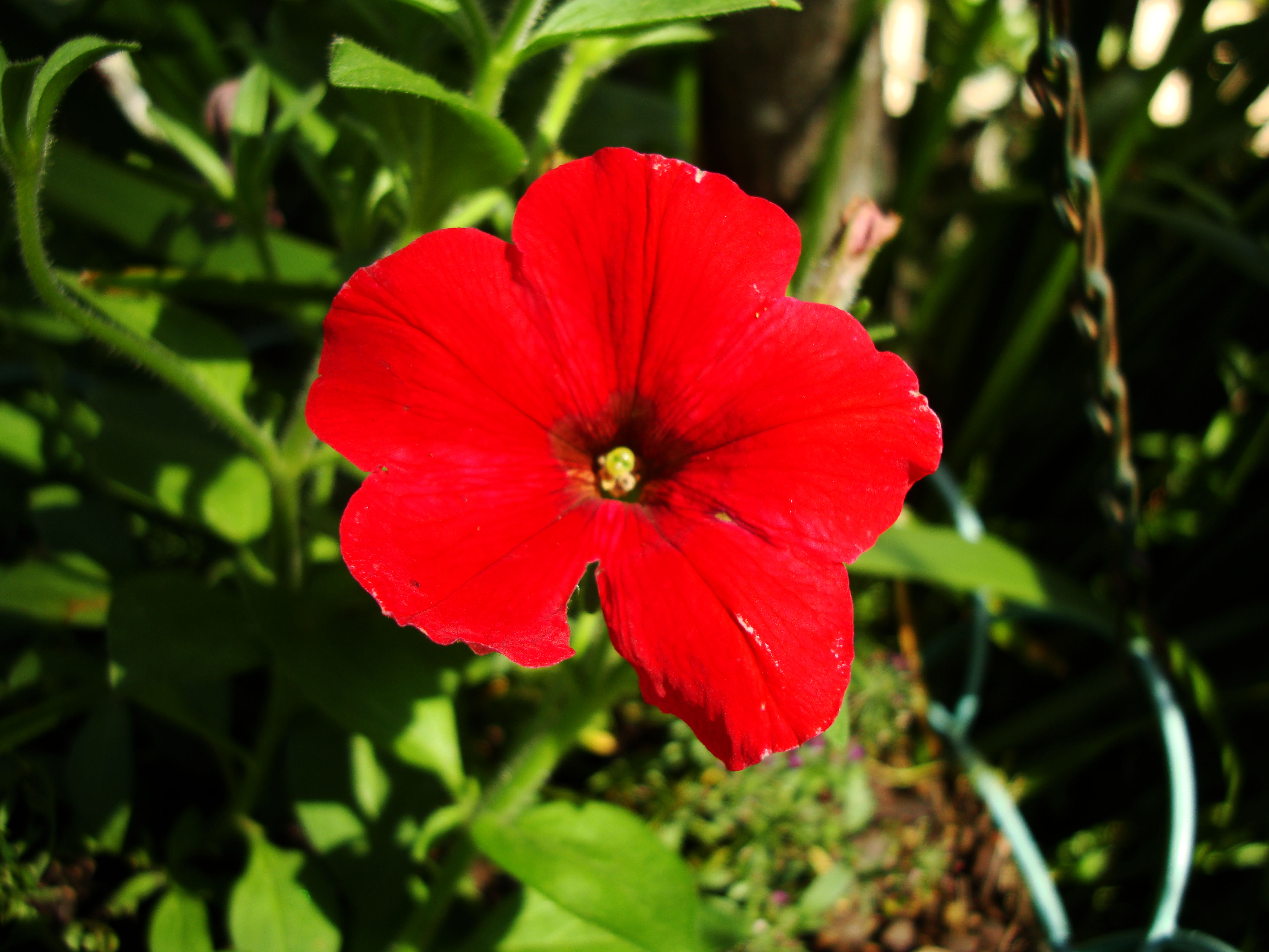 Flowers Australia Malaney 11