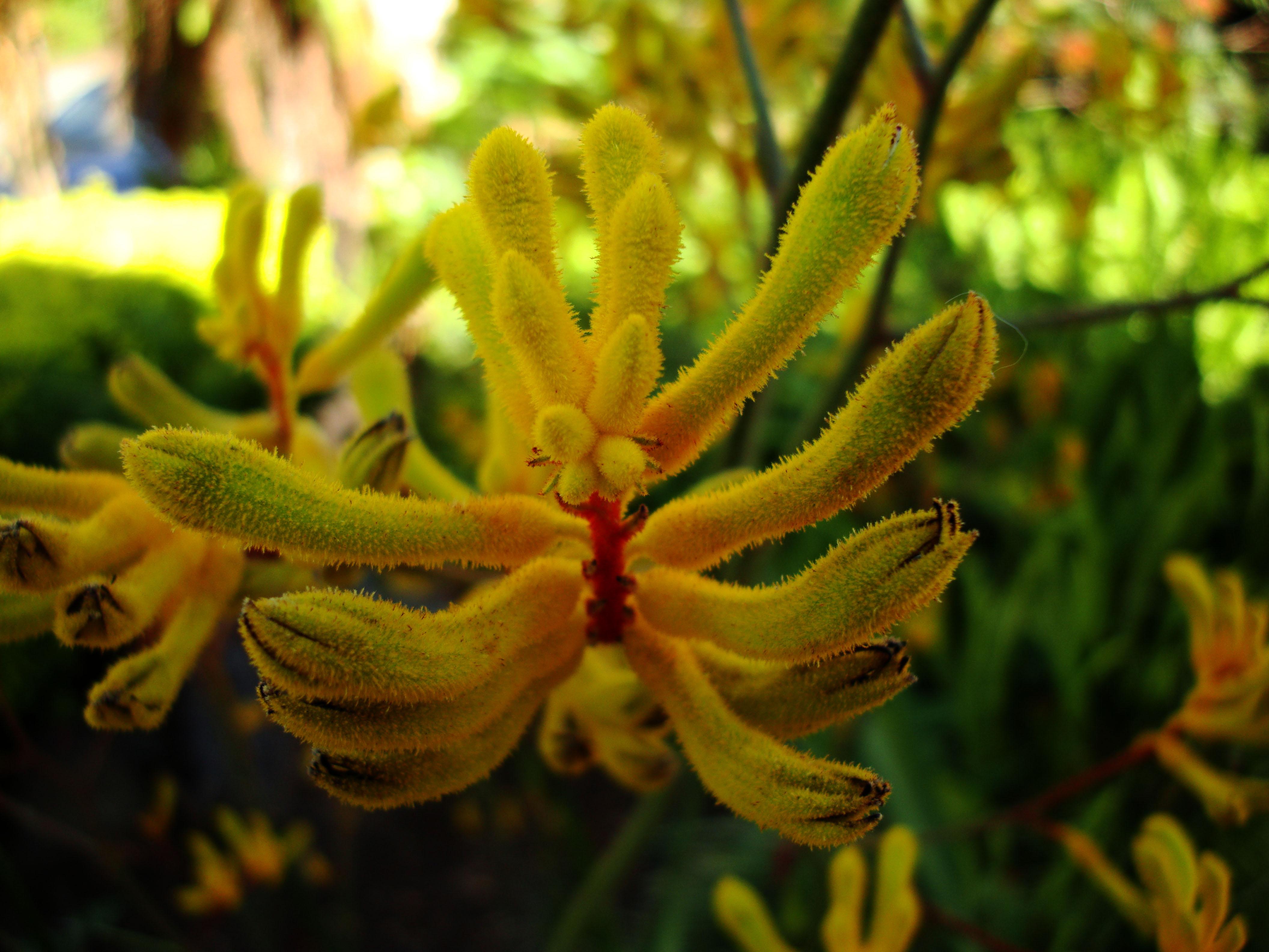 Flowers Australia Malaney 12