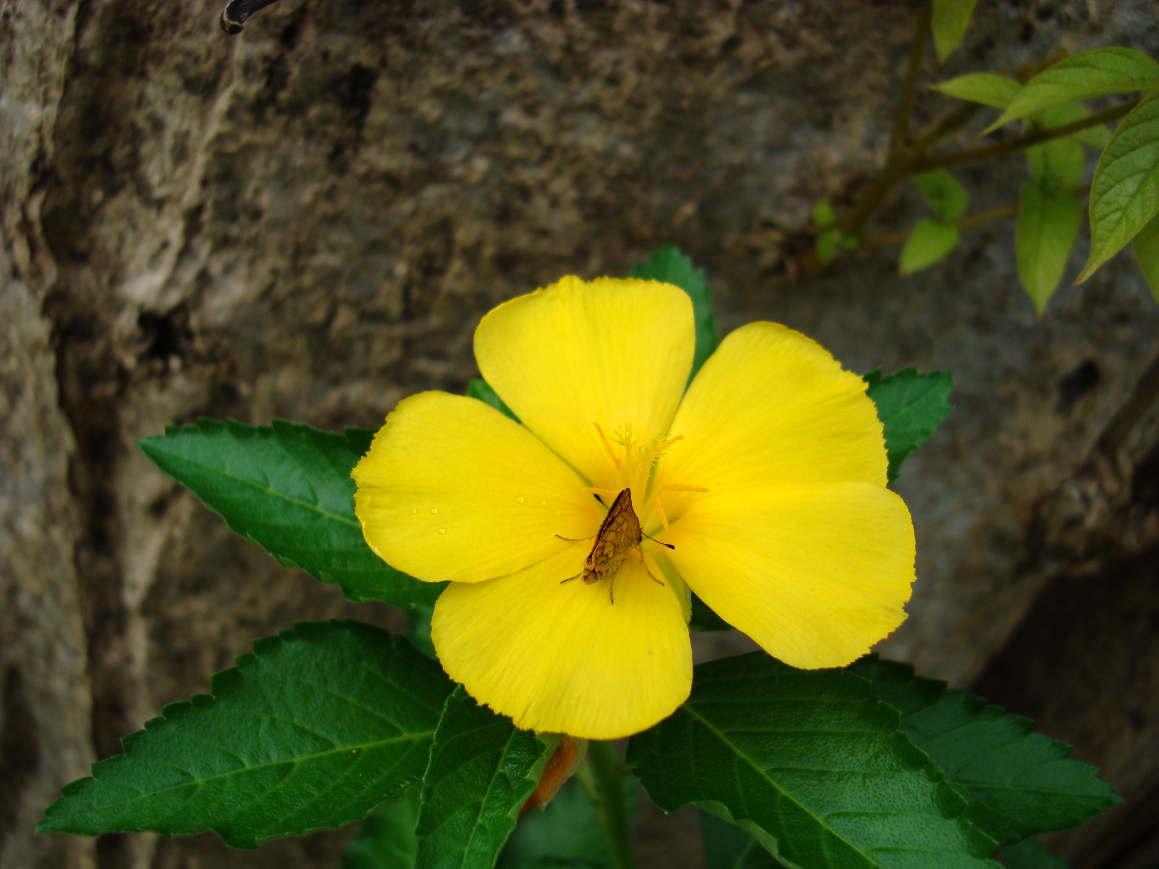 Flowers Philippines 007
