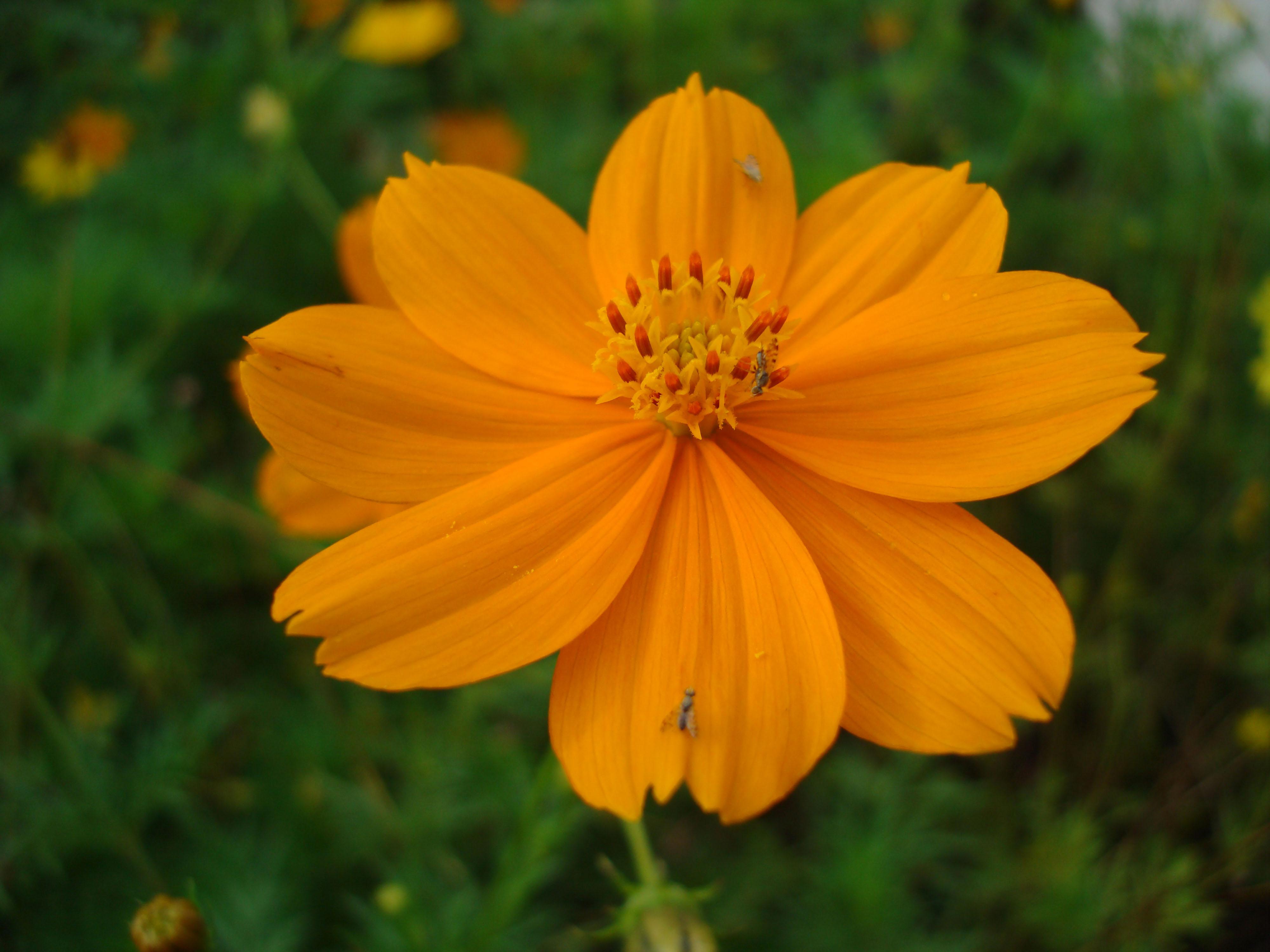 Flowers Philippines 009