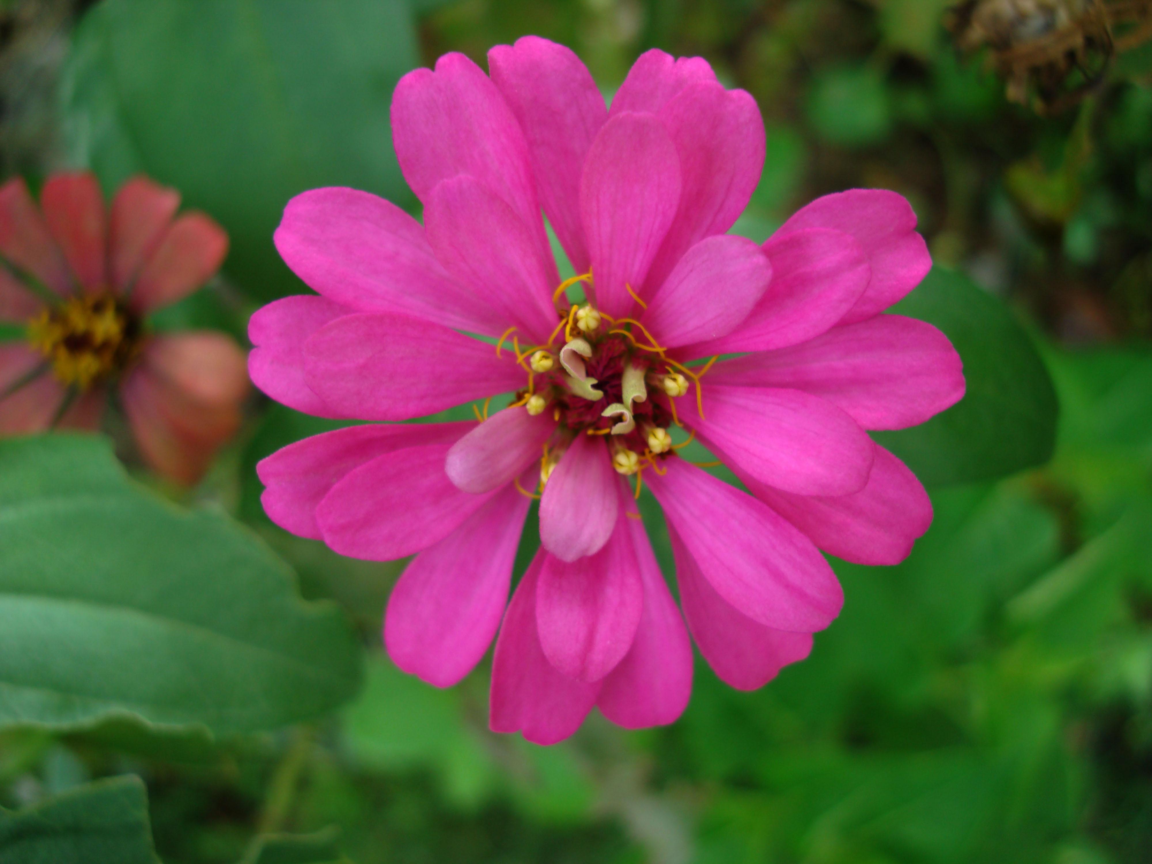 Flowers Philippines 024