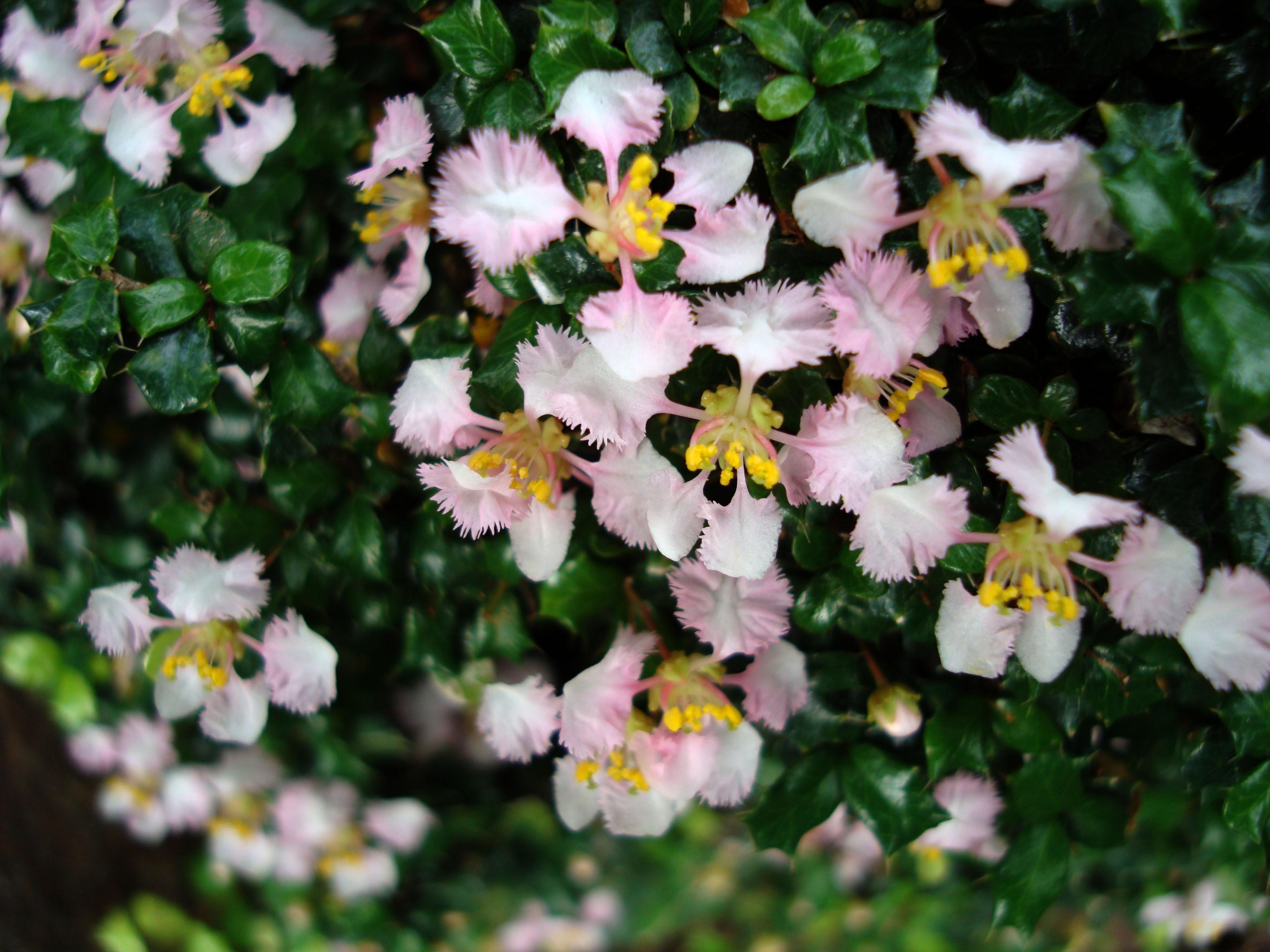 Flowers Philippines 032