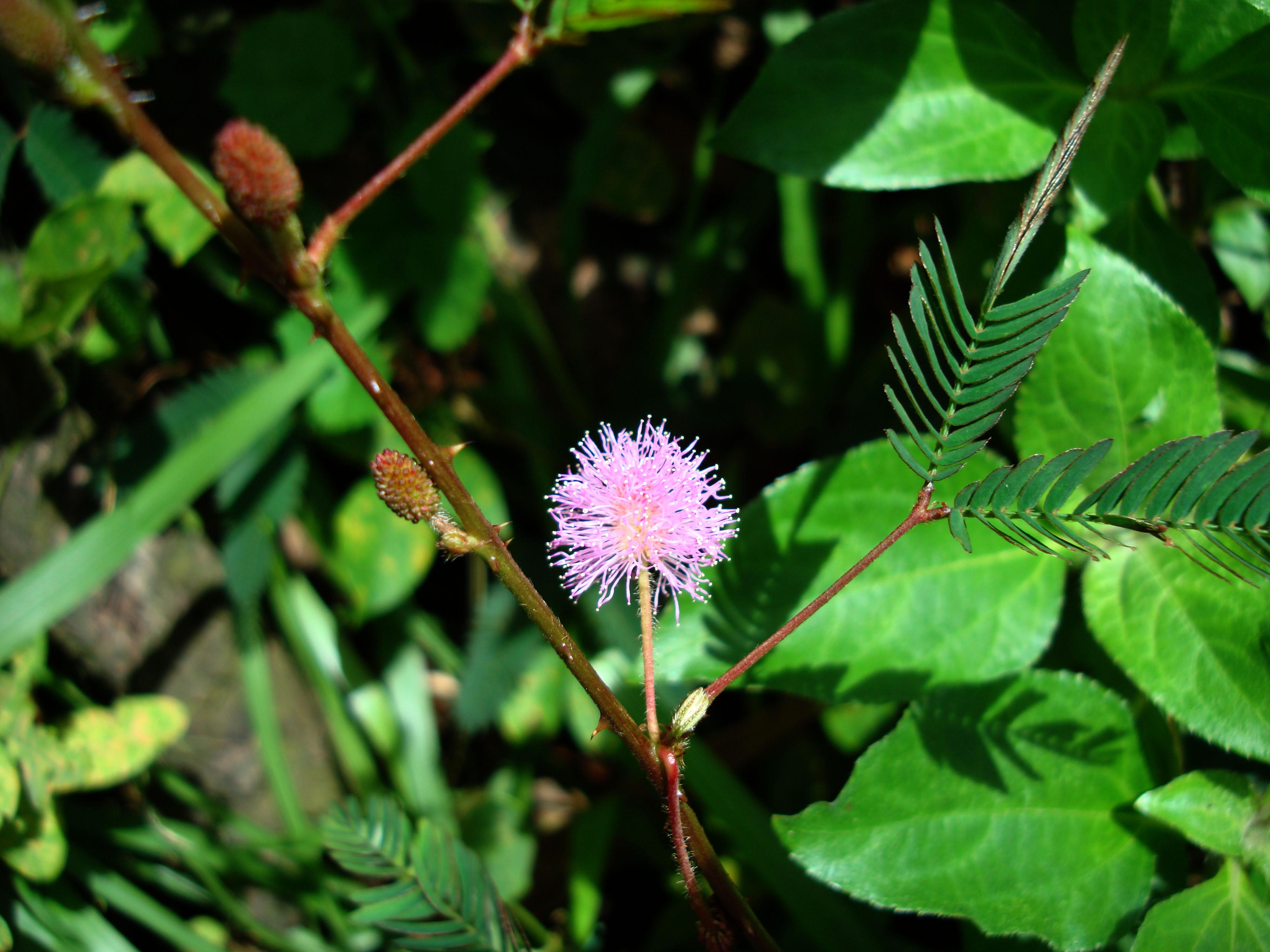 Flowers Philippines 049