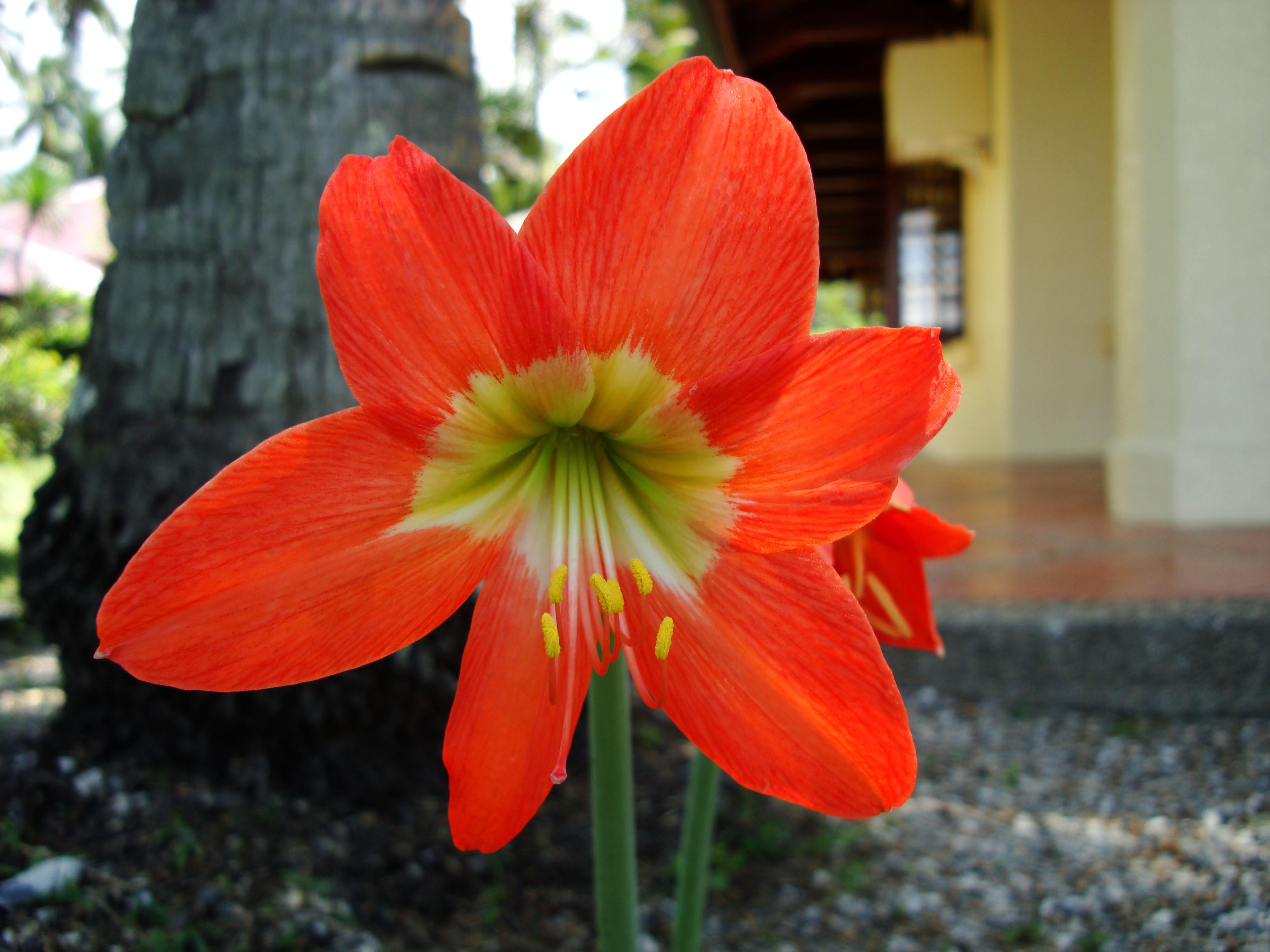 Flowers Philippines 066