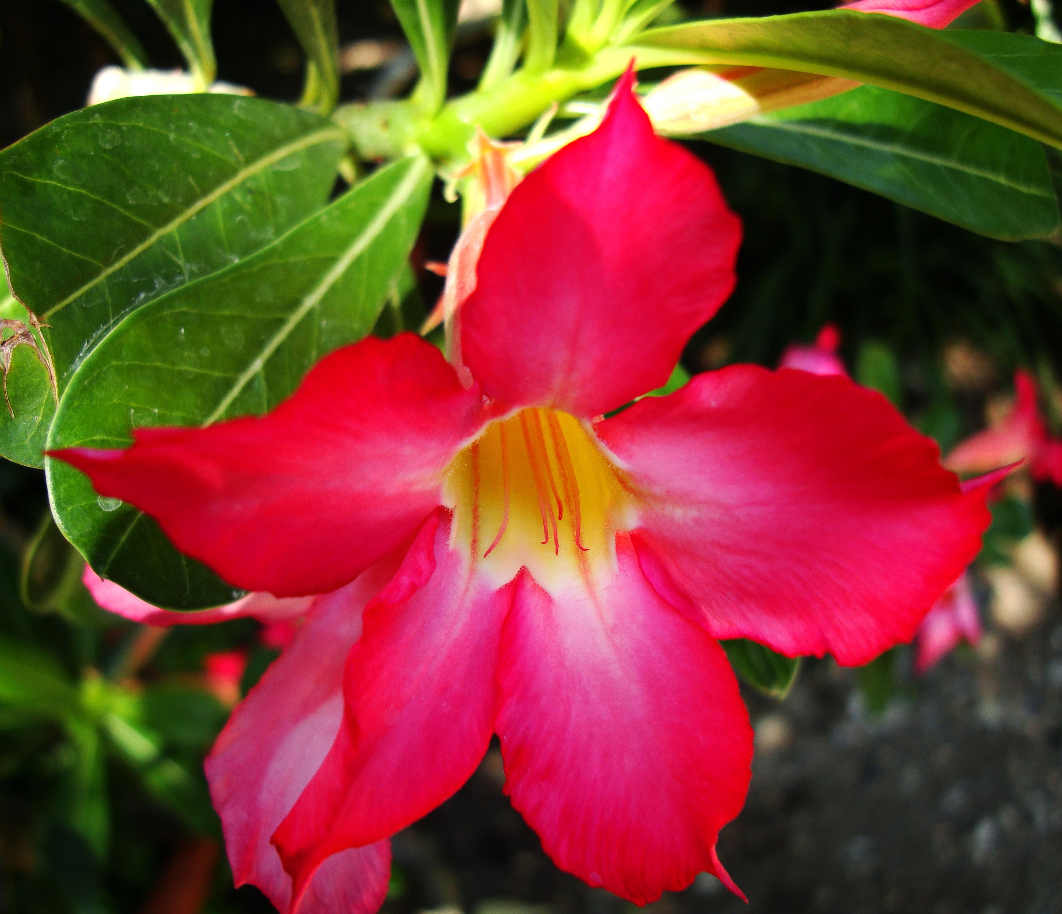 Flowers Philippines 073