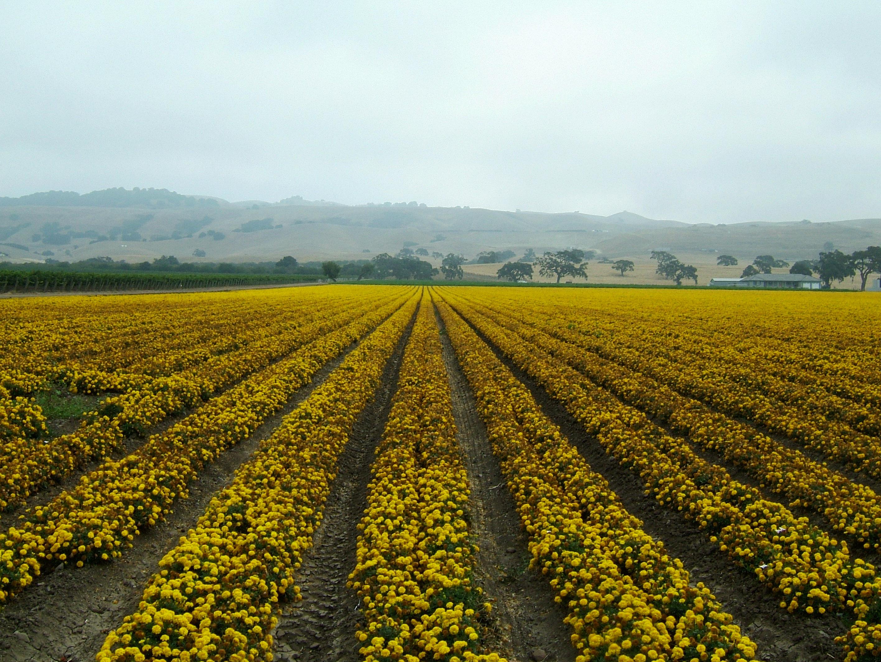 Flowers USA California Monterey Carmel 01