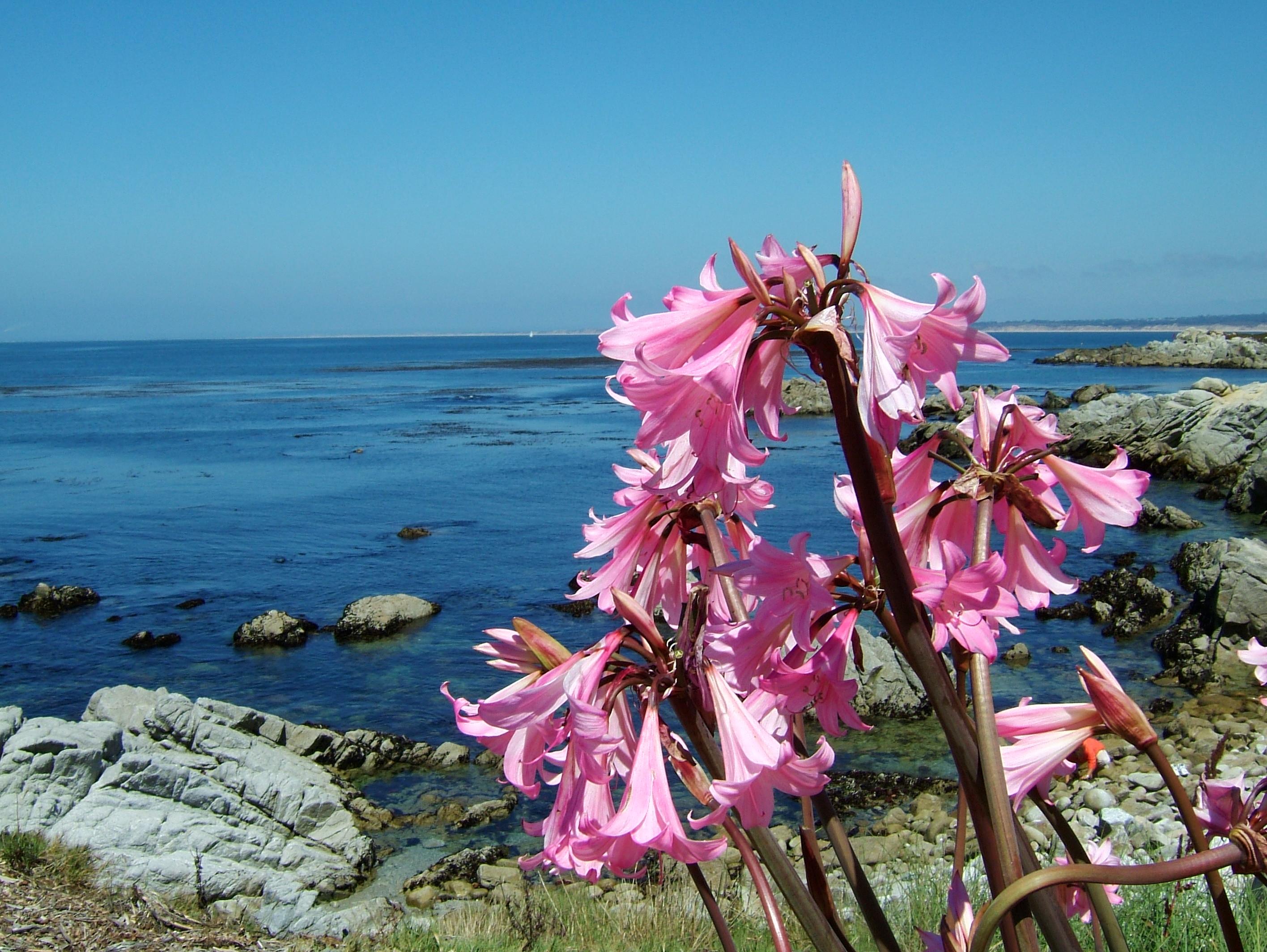 Flowers USA California Monterey Carmel 02