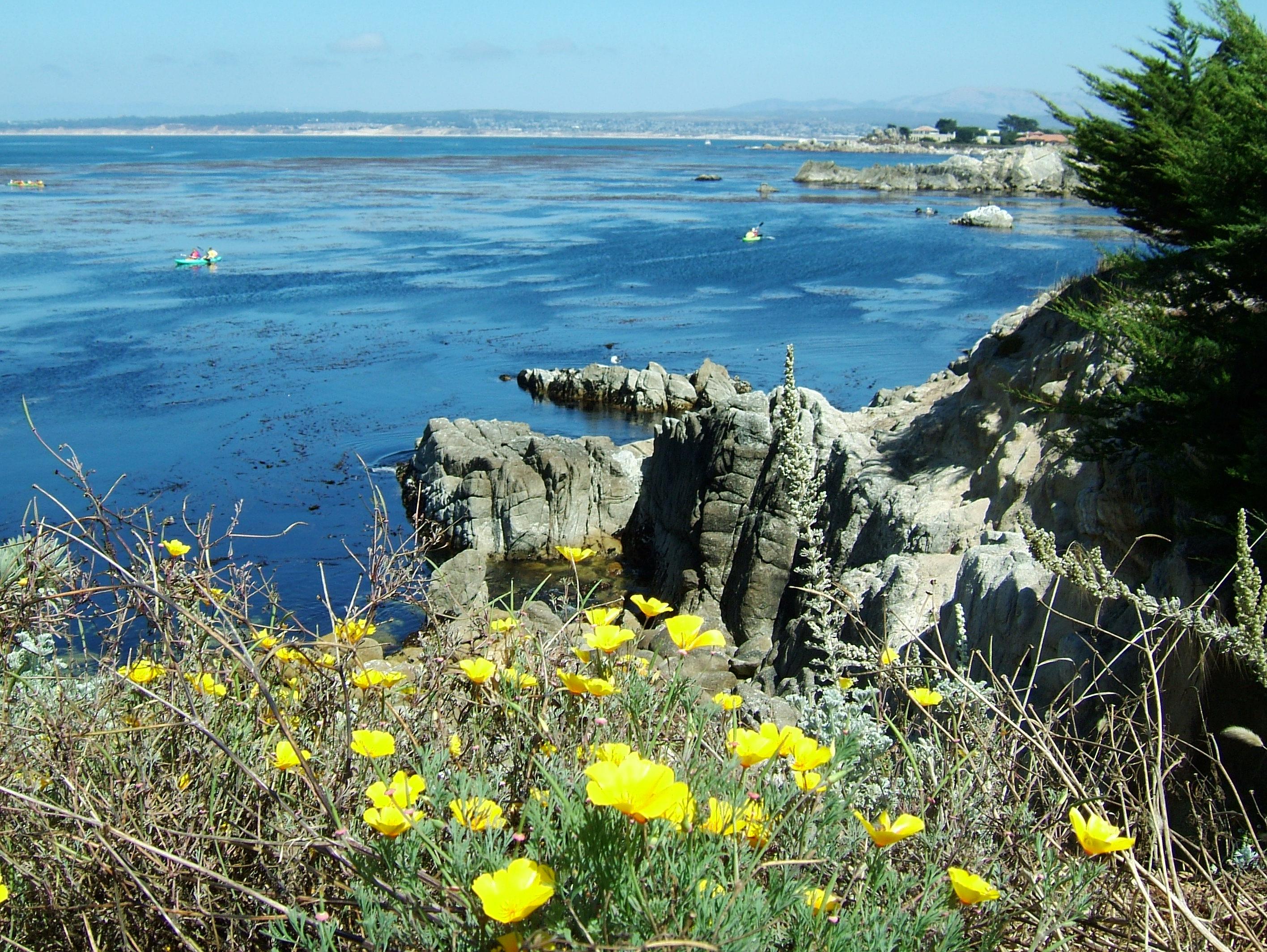 Flowers USA California Monterey Carmel 03