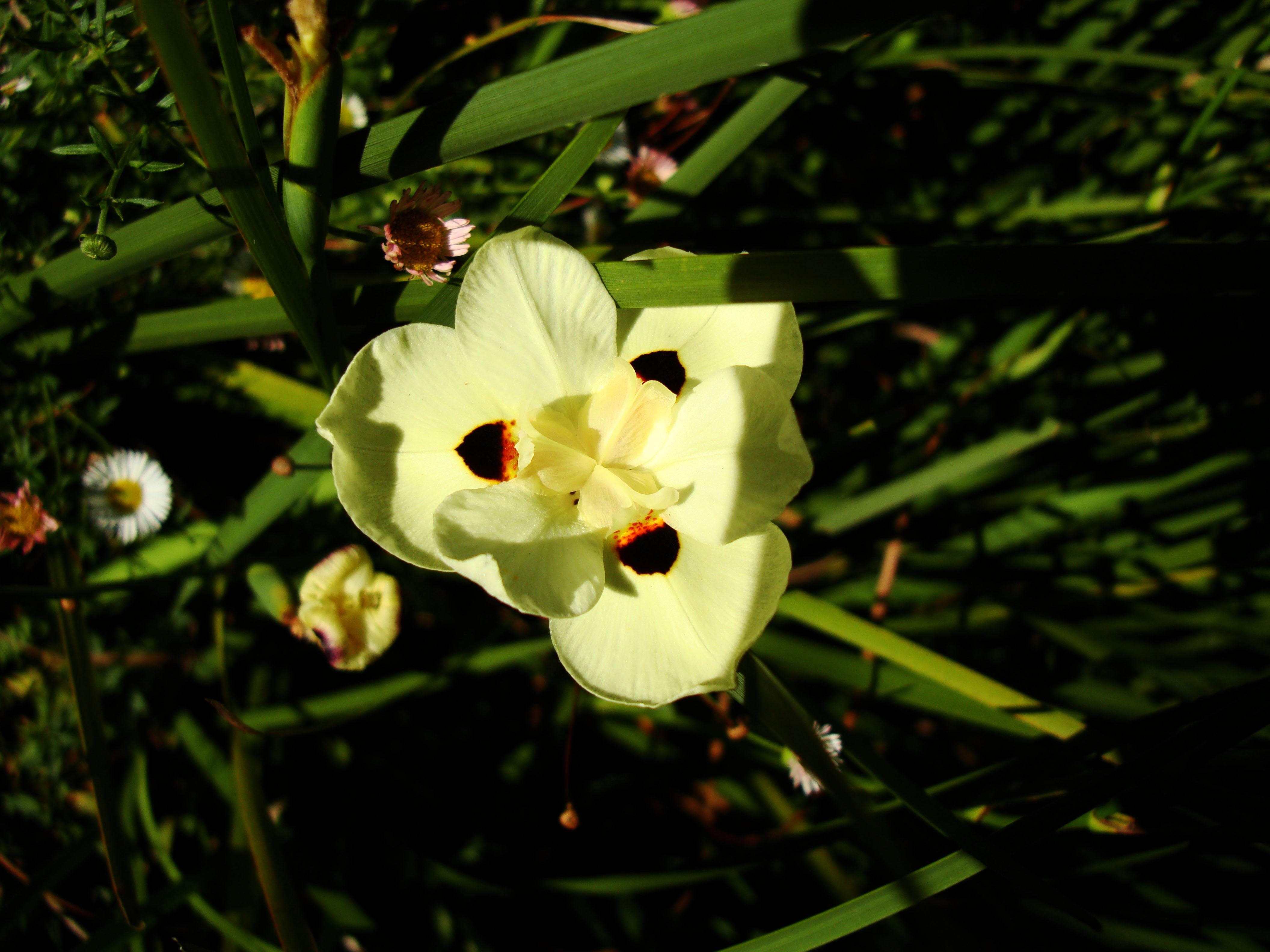 Spring flowers Malaney Queensland Australia 05