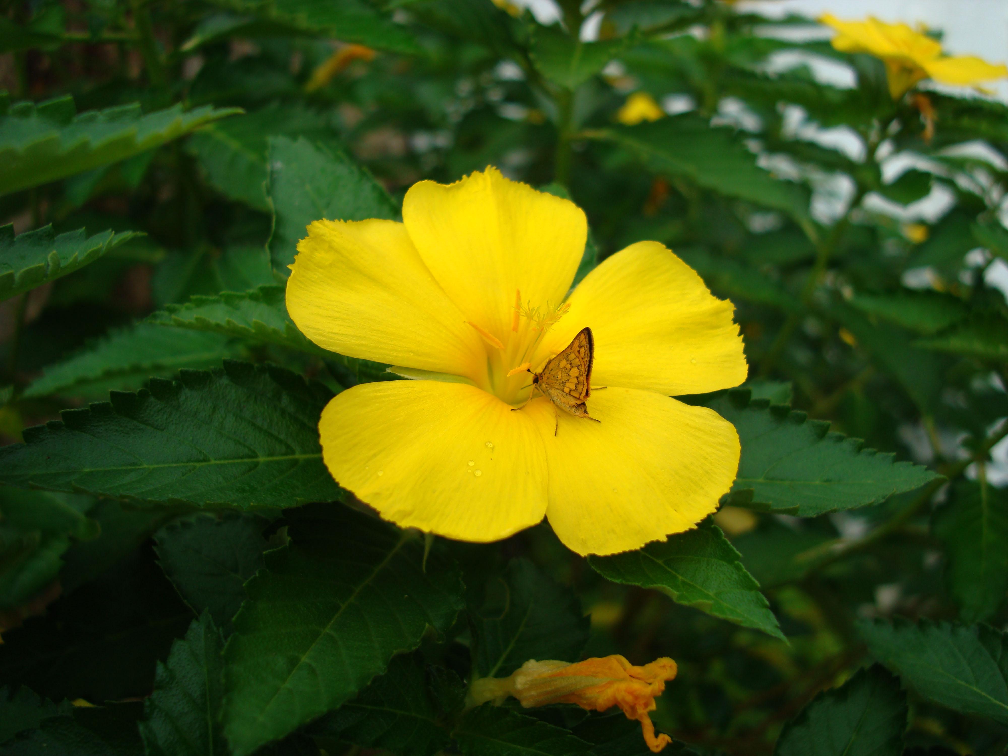 Tropical garden flowers Ayala Alabang Manila Philippines 01