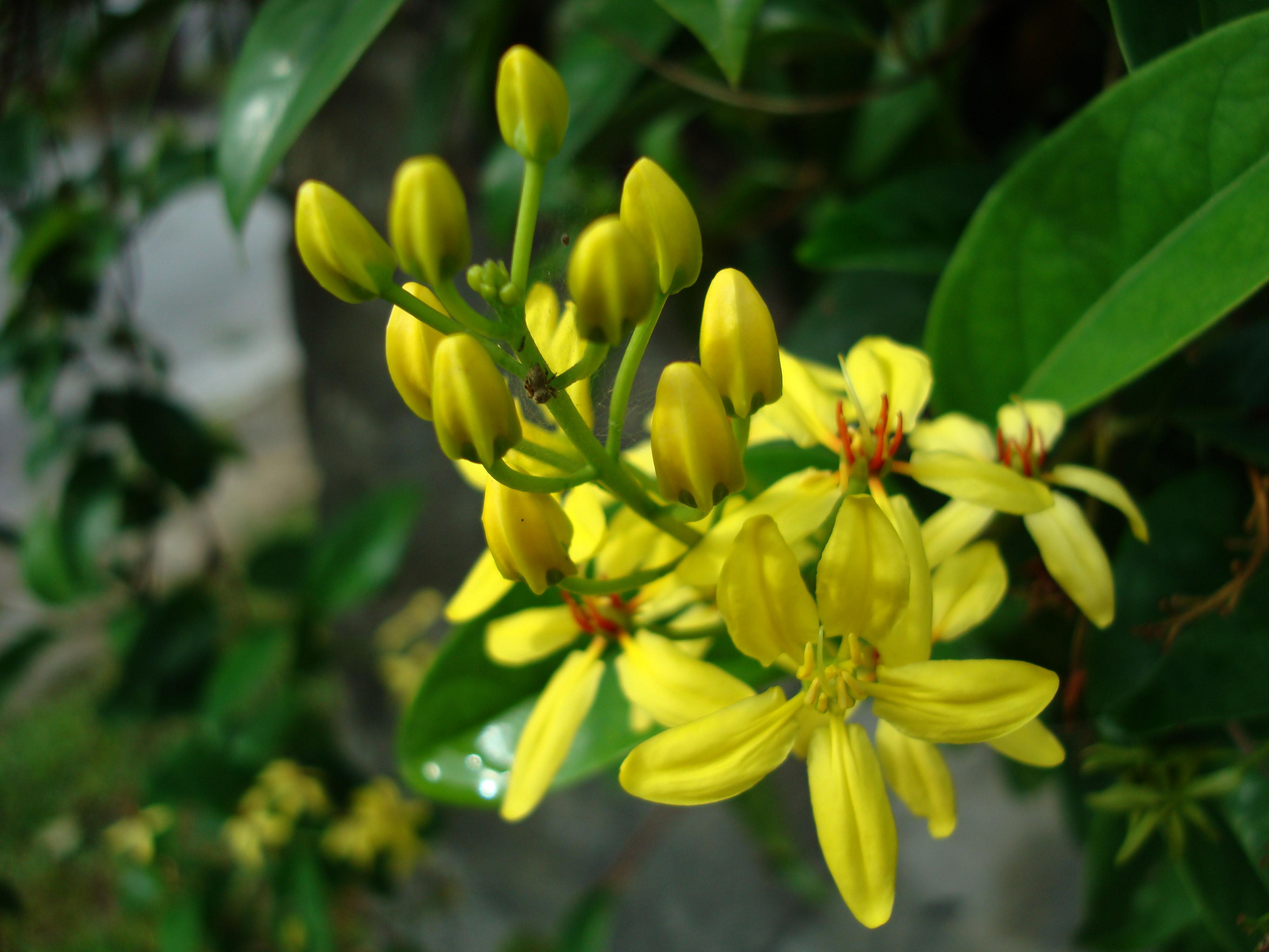 Tropical garden flowers Ayala Alabang Manila Philippines 27