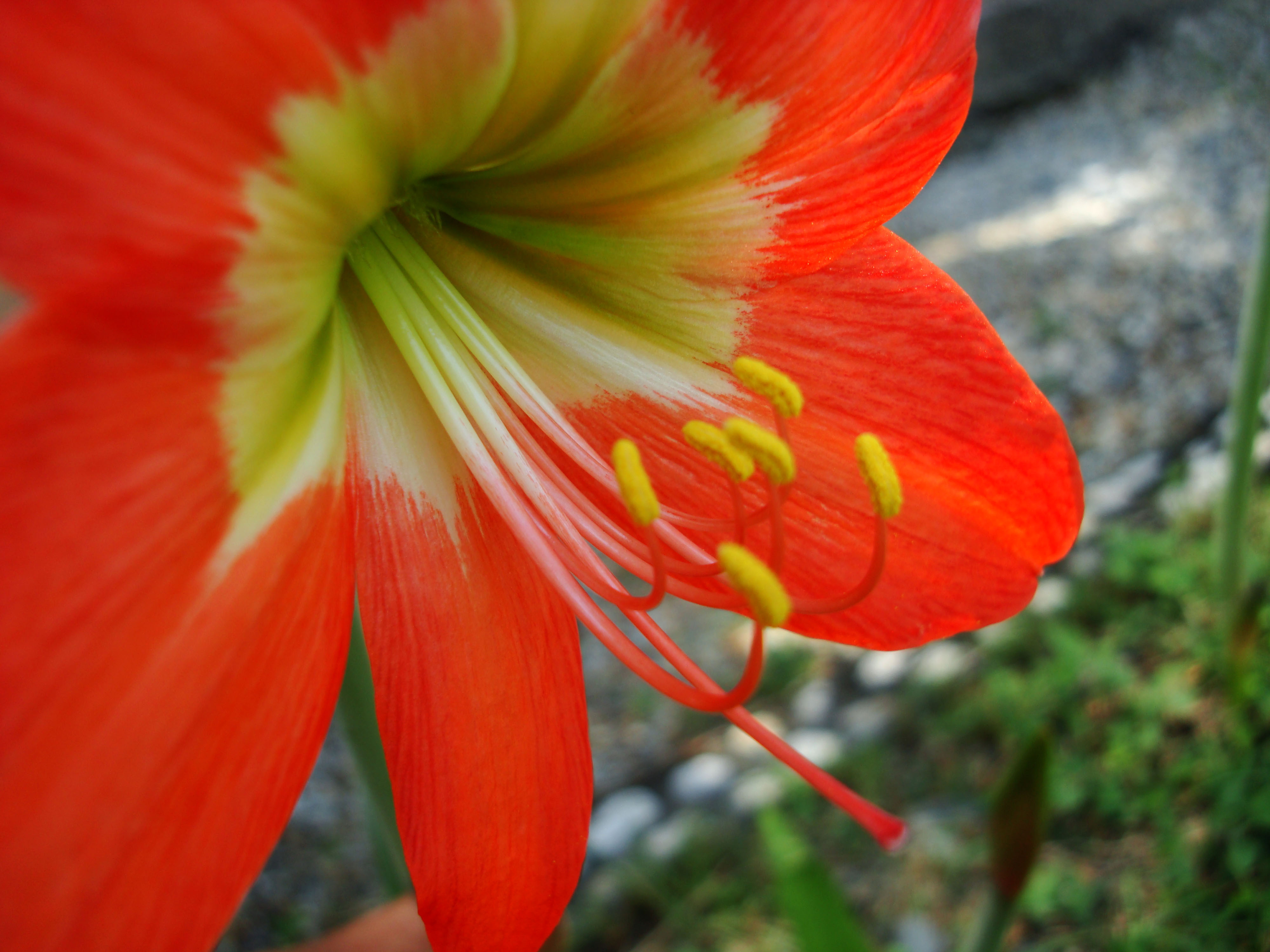 Tropical garden flowers Ayala Alabang Manila Philippines 68