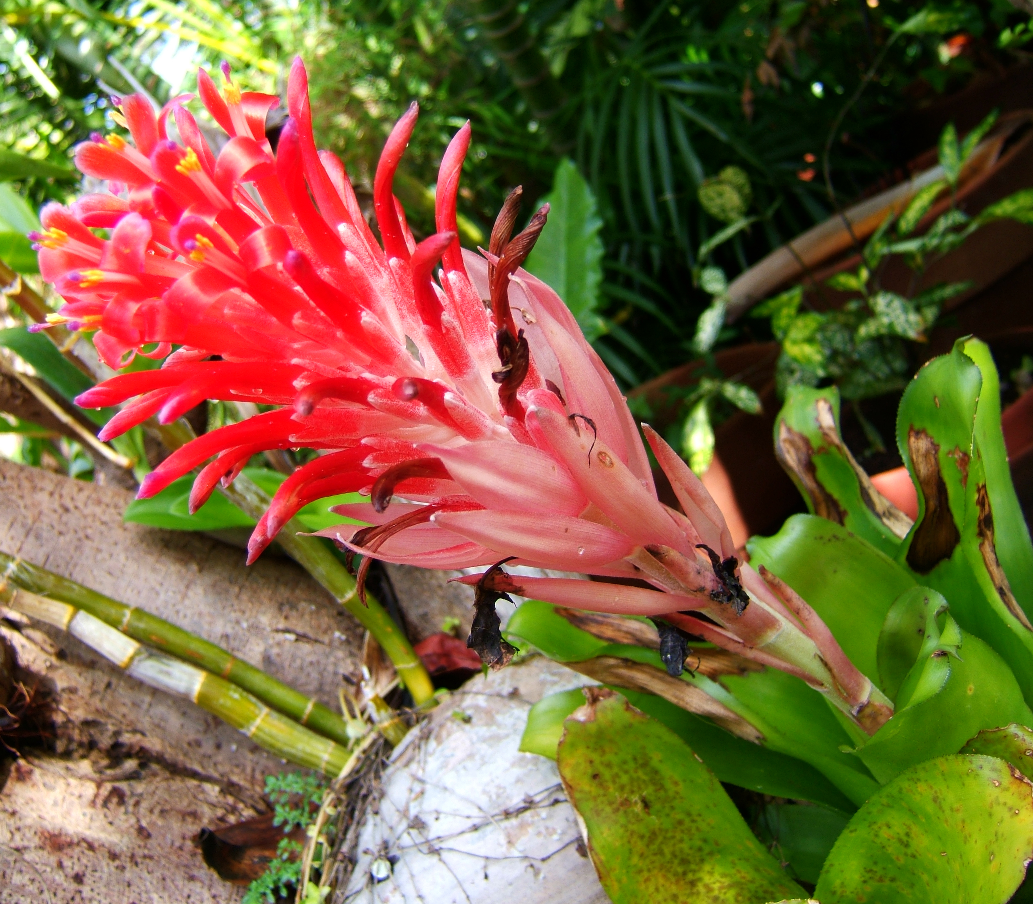 Tropical garden flowers Ayala Alabang Manila Philippines 99