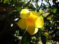 Asisbiz Flowers Australia Malaney 08