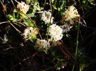 Asisbiz Flowers Noosa National Park 07
