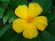 Asisbiz Flowers Philippines 008