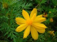 Asisbiz Flowers Philippines 010