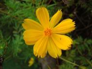Asisbiz Flowers Philippines 011