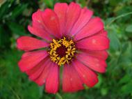 Asisbiz Flowers Philippines 025