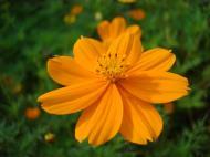 Asisbiz Flowers Philippines 044
