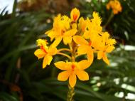 Asisbiz Spring flowers Malaney Queensland Australia 02