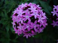 Asisbiz Spring flowers Malaney Queensland Australia 14