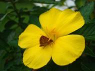 Asisbiz Tropical garden flowers Ayala Alabang Manila Philippines 02